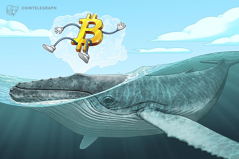 Las ballenas Bitcoin están comprando de forma más agresiva desde Navidad, según datos