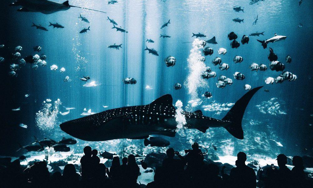 Por que 2020 fue el mejor año para la ballena XRP más gorda