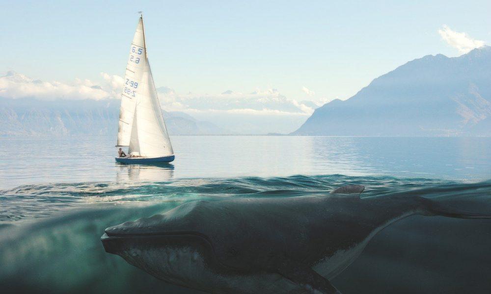 Por que Coinbase, Ripple y otras cripto ballenas movieron 365.7 millones de XRP