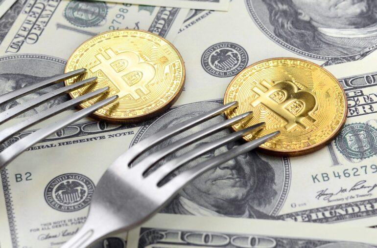 Kim Dotcom afirma que esta bifurcación está más infravalorada que Bitcoin, aquí está el por qué