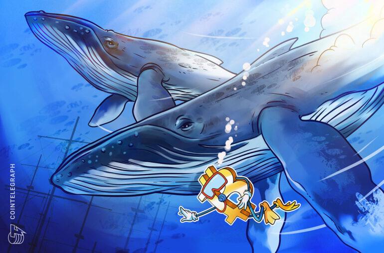Las ballenas de Bitcoin 'compraron la caída' ya que los pedidos de $ 100K o más alcanzan máximos históricos