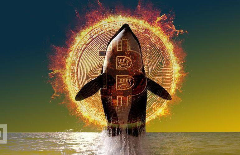 Bitcoin Whale mueve 5,000 BTC de una dirección inactiva