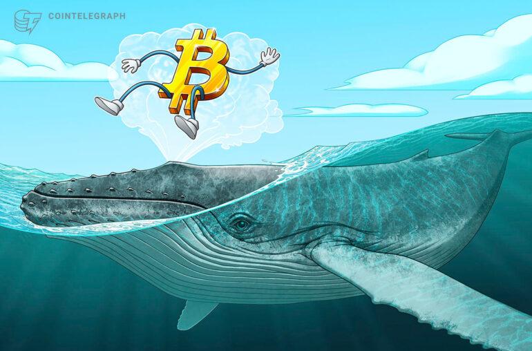 La tendencia alcista de Bitcoin no ha terminado: las grandes ballenas no están vendiendo BTC, según muestran los datos
