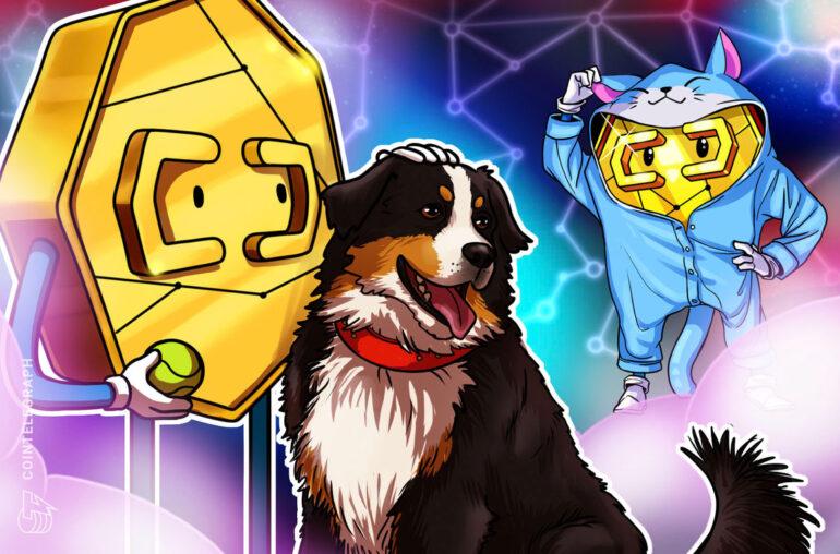 Los Bitcoiners aman a los perros, los bichos de oro prefieren a los gatos