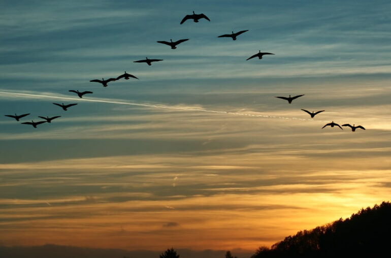 Cardano Founder Expects The Birds to Land in March as ADA Sentiment Recovers