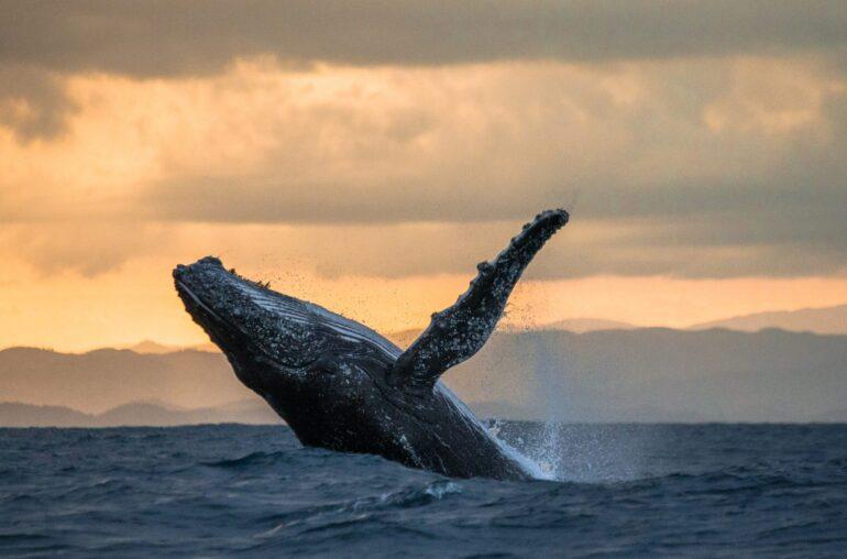 No, una ballena no hizo que Bitcoin se estrellara de la noche a la mañana