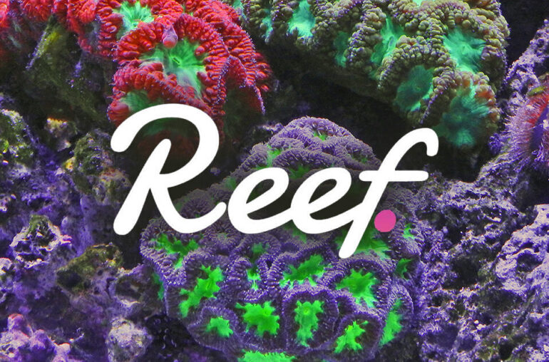 Reef Finance unveils basket product tied to DeFi investments
