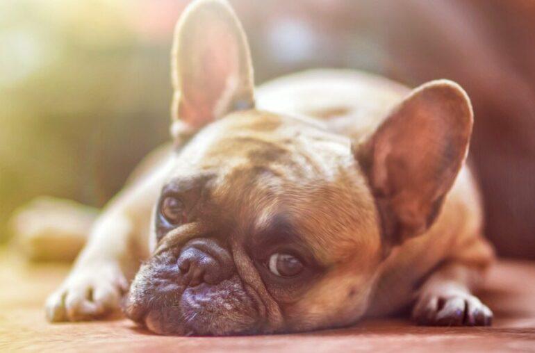 Análisis de precios de Cardano, ICP, Dogecoin: 29 de mayo