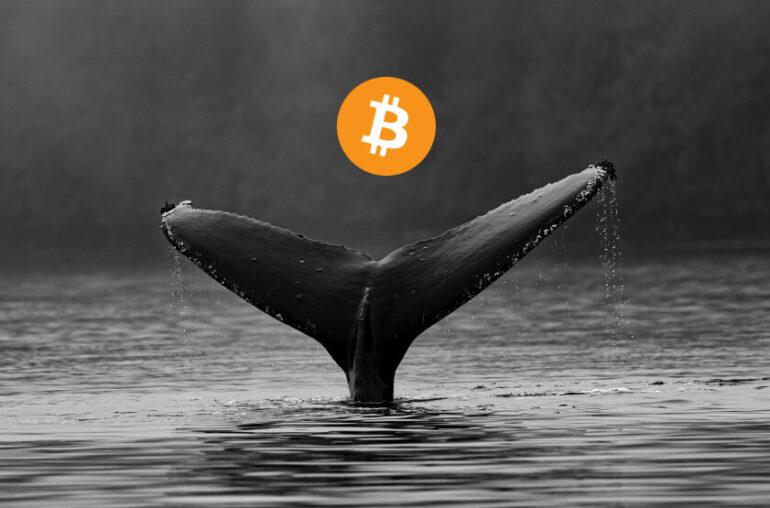 'Parece que el mercado bajista de Bitcoin está confirmado' ... PERO aquí está el truco
