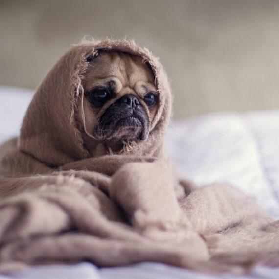 Análisis de precios de Dogecoin: 12 de junio