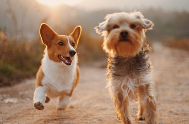 Esta criptografía aumentó un 84% en 24 horas, pero ¿por qué la Fundación Dogecoin no está contenta?
